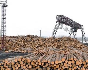 Лесозаготовка. Первый этап производства клееного бруса.